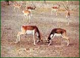 Gajner Wildlife Sanctuary, Bikaner